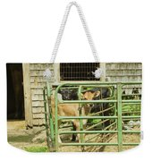 Young Calf In Fence Pen Near Barn Summer Maine Weekender Tote Bag