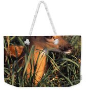 Young Deer Laying In Grass Weekender Tote Bag
