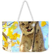 Young Lynx In A Tree Weekender Tote Bag