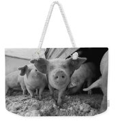 Young Pigs In A Snowy Pen. Property Weekender Tote Bag