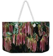 Young Red Leaves Lacking Chlorophyll Weekender Tote Bag