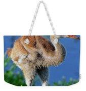 Young Sandhill Crane Weekender Tote Bag