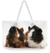 Young Tricolour Guinea Pigs Weekender Tote Bag