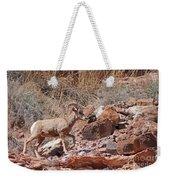 Escalante Canyon Desert Bighorn Sheep  Weekender Tote Bag
