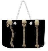 3d Rendering Of Human Vertebral Column Weekender Tote Bag