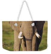 African Elephant Loxodonta Africana Weekender Tote Bag by Gerry Ellis