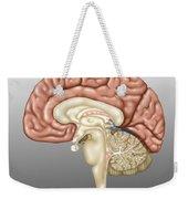 Anatomy Of The Brain, Illustration Weekender Tote Bag
