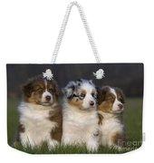 Australian Shepherd Puppies Weekender Tote Bag