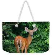 Backyard Deer Weekender Tote Bag