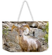 Bighorn Sheep In The San Isabel National Forest Weekender Tote Bag