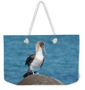 Blue-footed Booby On Rock Weekender Tote Bag