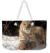 Bobcat In The Snow. Weekender Tote Bag