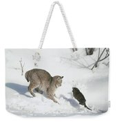Bobcat Lynx Rufus Hunting Muskrat Weekender Tote Bag by Michael Quinton