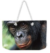 Bonobo Pan Paniscus Portrait Weekender Tote Bag