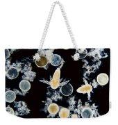 Brine Shrimp Artemia Salina, Lm Weekender Tote Bag