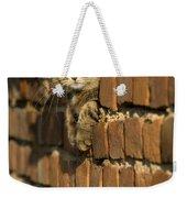 Cat On A Brick Wall Weekender Tote Bag