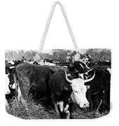 Cattle: Longhorns Weekender Tote Bag
