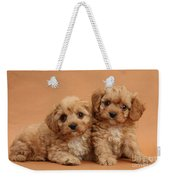 Cavapoo Pups Weekender Tote Bag by Mark Taylor