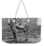 Comic Criminal Riding A Zebra Weekender Tote Bag