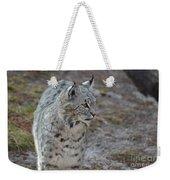 Curious Wandering Bobcat Weekender Tote Bag