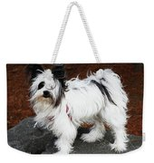 Dog At The Port Of Olympia Weekender Tote Bag