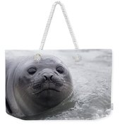Elephant Seal Pup Weekender Tote Bag