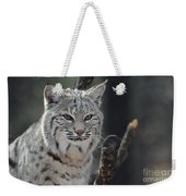 Face Of A Canadian Lynx Weekender Tote Bag