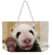 Giant Panda Ailuropoda Melanoleuca Cub Weekender Tote Bag