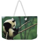Giant Panda Ailuropoda Melanoleuca Year Weekender Tote Bag
