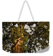 Giant Sequoia Weekender Tote Bag