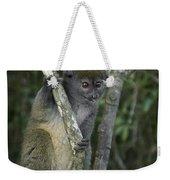 Gray Bamboo Lemur Weekender Tote Bag