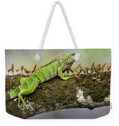 Green Iguana Iguana Iguana, Tarcoles Weekender Tote Bag