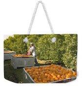 Harvesting Navel Oranges Weekender Tote Bag