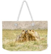 Himalayan Marmots Pair Kissing In Open Grassland Ladakh India Weekender Tote Bag