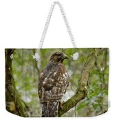 Juvenile Short-tailed Hawk Weekender Tote Bag