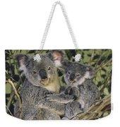 Koala Phascolarctos Cinereus Mother Weekender Tote Bag by Gerry Ellis