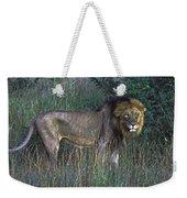 Male Lion Weekender Tote Bag