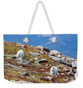 Mountain Goats On Mount Bierstadt In The Arapahoe National Forest Weekender Tote Bag