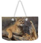 Mountain Lion Felis Concolor Weekender Tote Bag