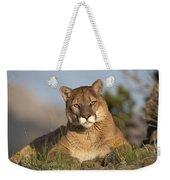 Mountain Lion Portrait North America Weekender Tote Bag