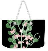 Pacific Mistletoe, Phoradendron Weekender Tote Bag