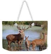 Red Deer In Bushy Park London Weekender Tote Bag