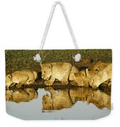 Reflected Lions Weekender Tote Bag