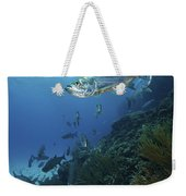 School Of Tarpon, Bonaire, Caribbean Weekender Tote Bag by Terry Moore