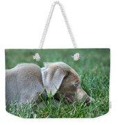 Silver Labrador Retriever Puppy  Weekender Tote Bag