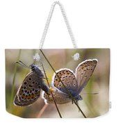 Silver-studded Blue Butterflies Weekender Tote Bag