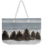 Stellers Sea Lion Eumetopias Jubatus Weekender Tote Bag by Michael Quinton