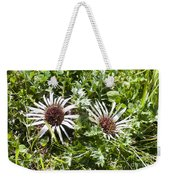 Stemless Carline Thistle Carlina Acaulis Weekender Tote Bag