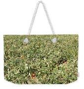 Tomato Field, California Weekender Tote Bag