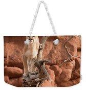 Treed Mountain Lion Weekender Tote Bag